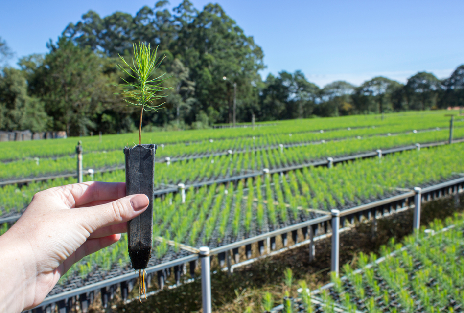 Blockchain Technology to Help Reforestation in Paraguay