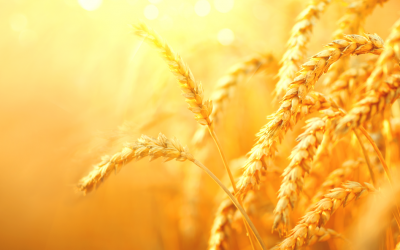 Reshaping the Agriculture Industry with Blockchain